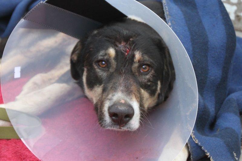 Вмэрии Махачкалы сообщили онепричастности котстрелу бездомных собак вгороде