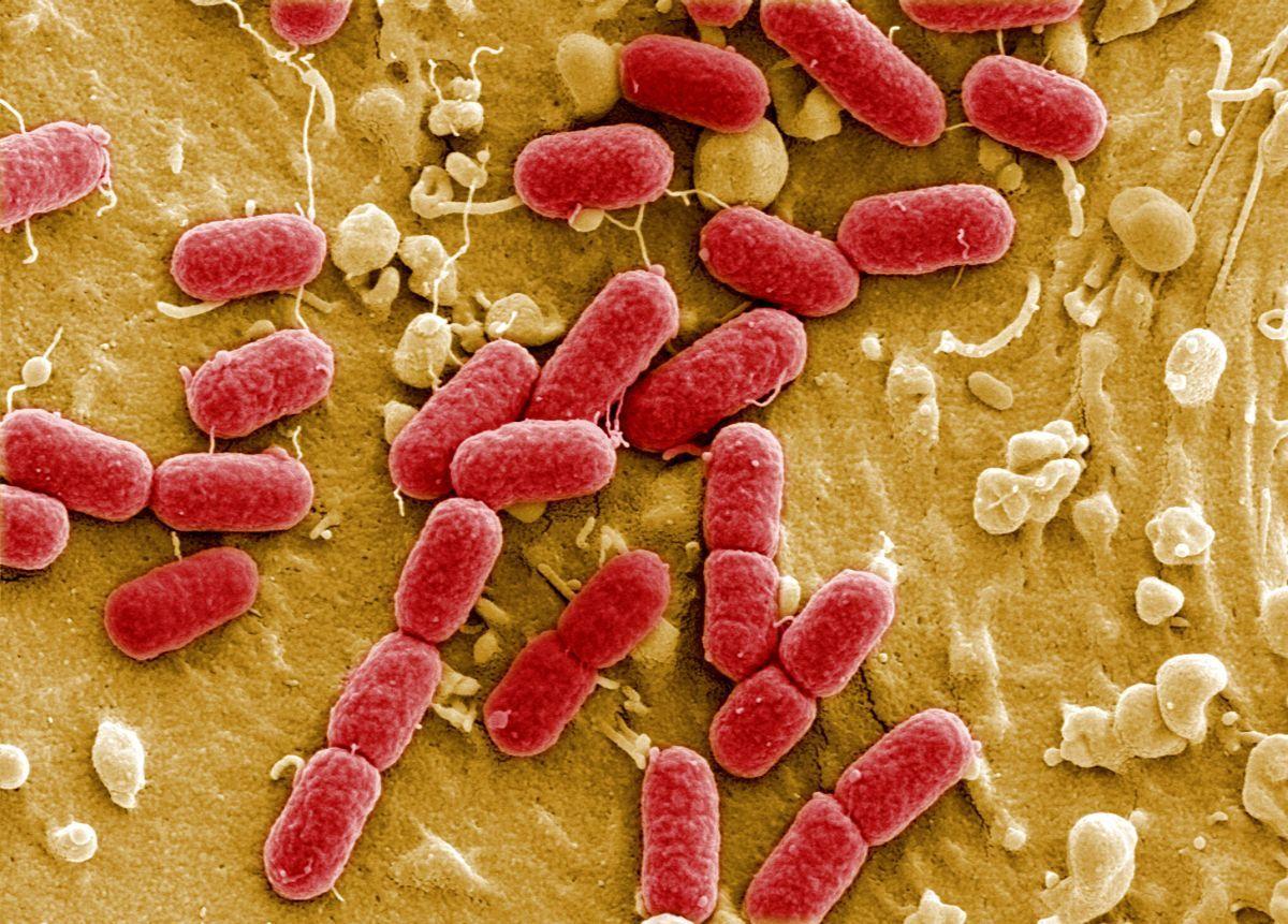 Сосмертельными бактериями несправиться никаким антибиотикам— ВОЗ