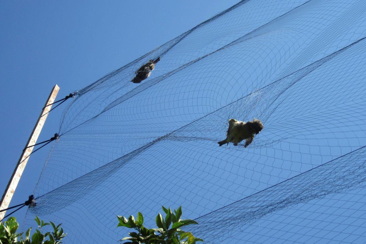 Накипрской военной базе Великобритании  убили 800 000  птиц— ученые