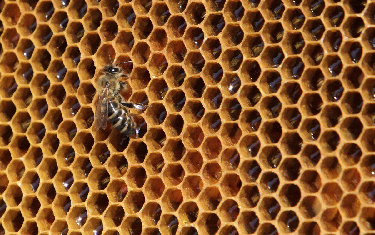 Украинские пчеловоды получили почти четверть миллиарда гривень дотаций
