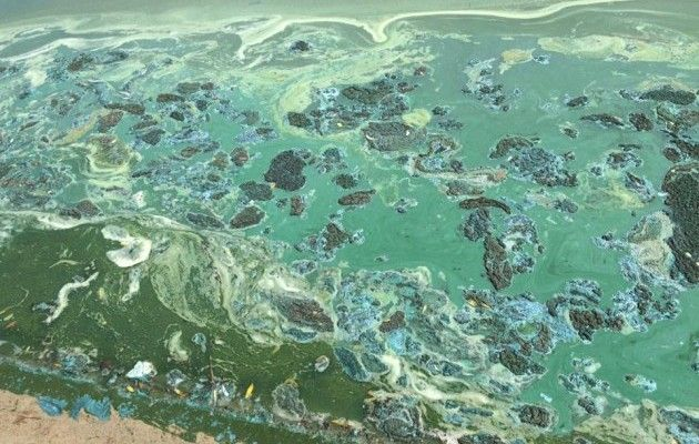 ВКиеве озеро «Солнечное» покрылось ужасной пленкой
