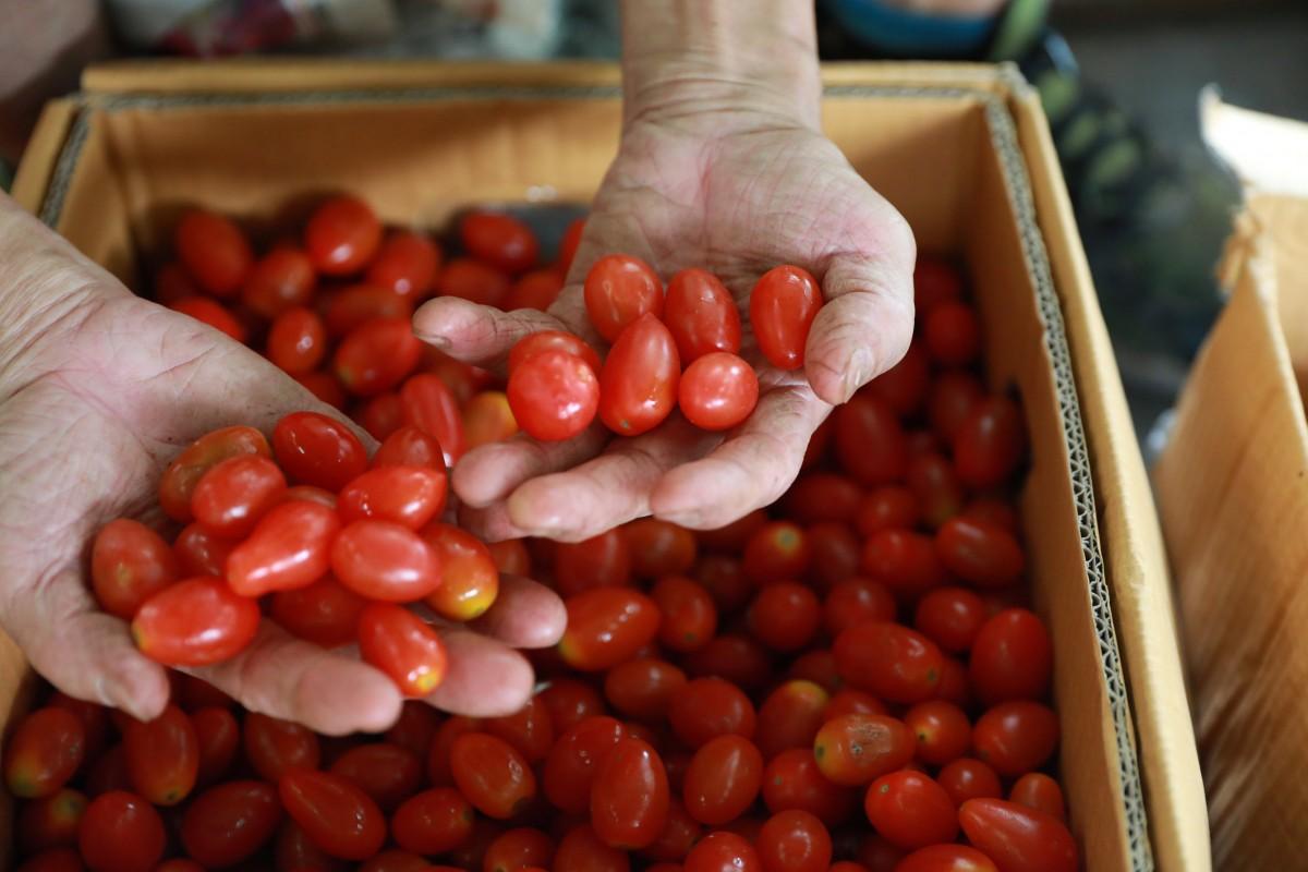 За прошлый год Украина импортировала 86,7 тыс. тонн томатов —