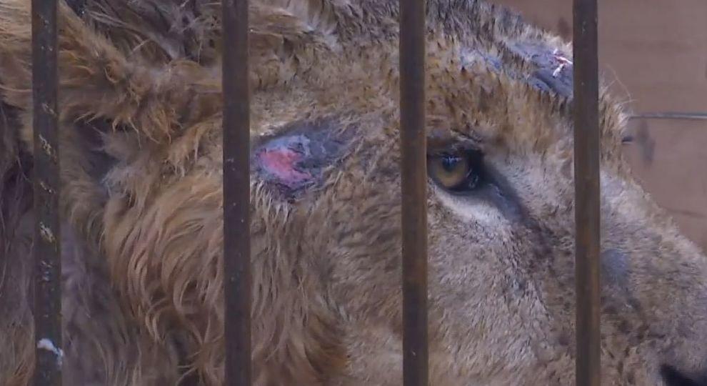 """""""Уходите, сейчас камеру разобью нах*р"""": журналисты попыталась узнать о состоянии животных в зоопарке на Донетчине photo"""