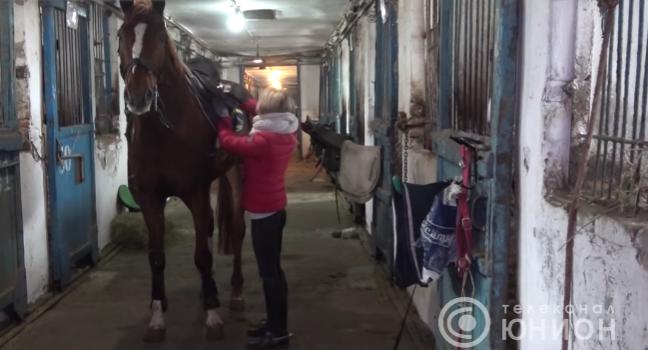 Кінна школа в окупованій Макіївці – на межі закриття: коні голодують та хворіють