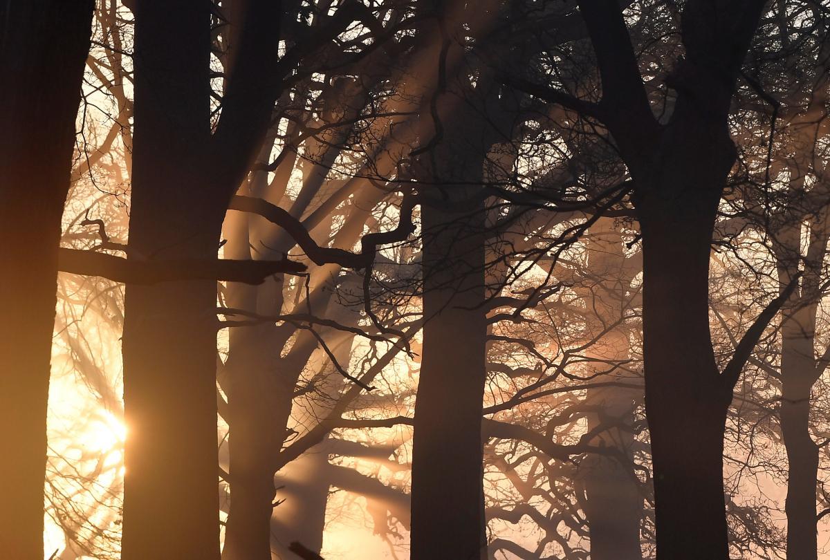 Австралія планує посадити мільярд дерев у боротьбі зі зміною клімату