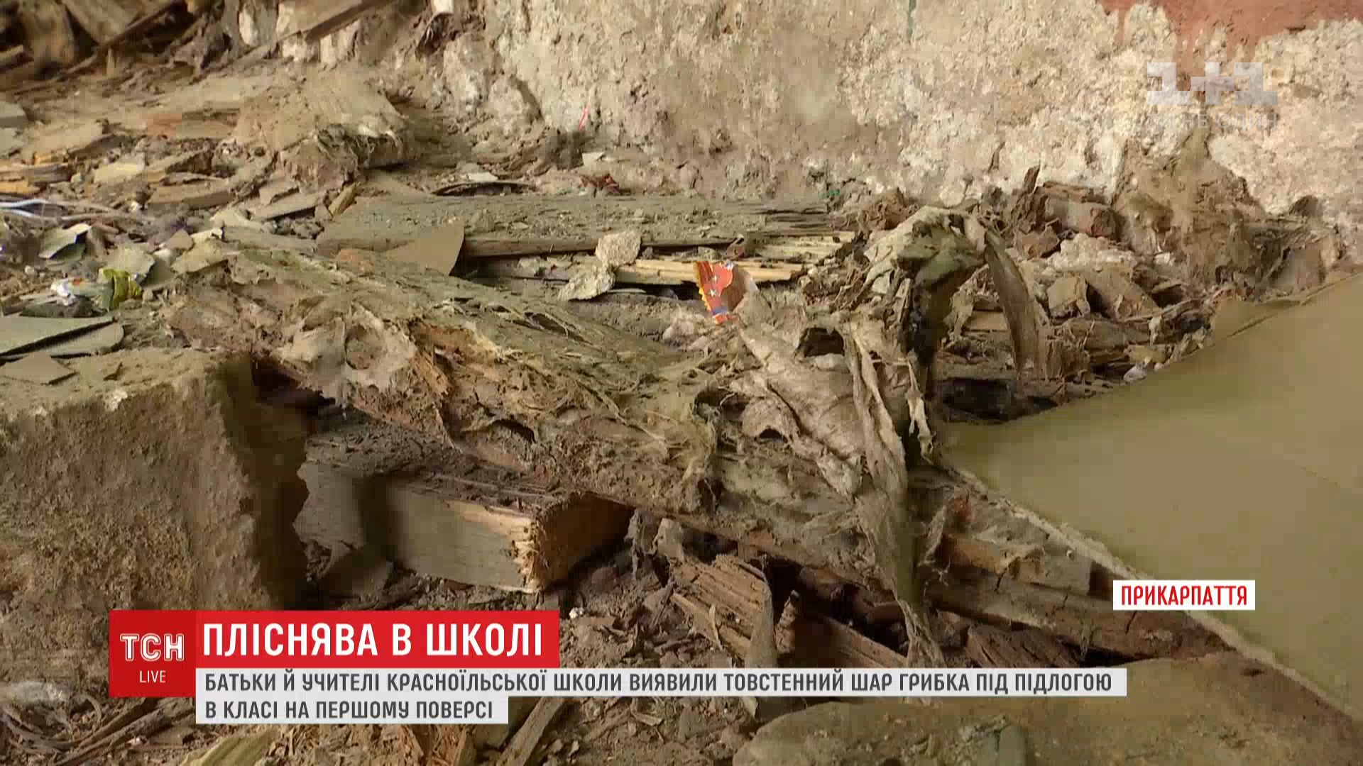 """На Прикарпатье полтысячи учеников не могут учиться из-за грибка, """"захватившего"""" школу"""