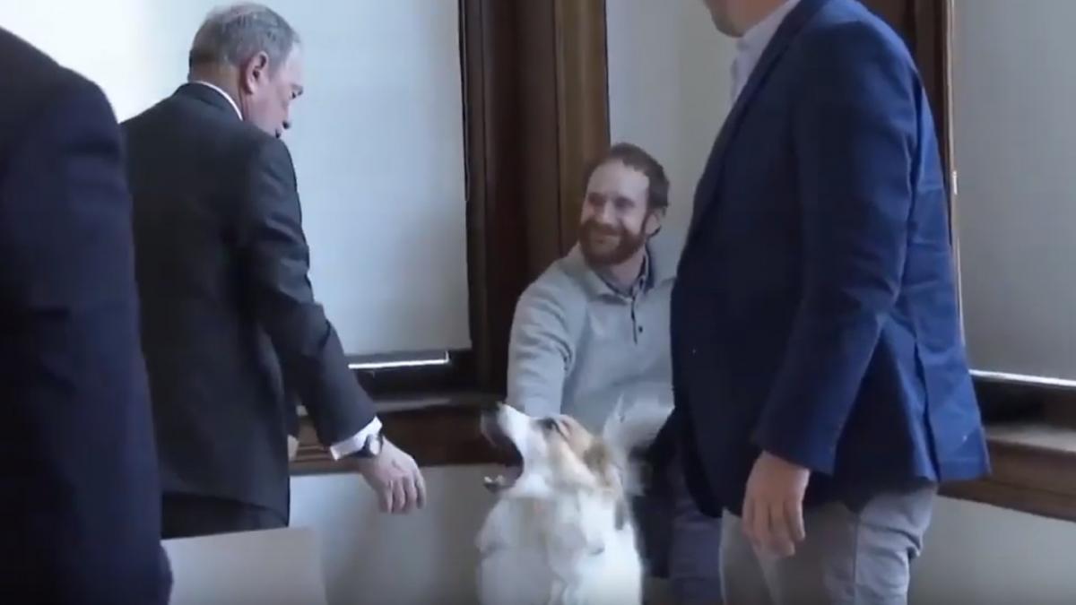 Замість лапи мільярдер потиснув собаці морду / скріншот з відео
