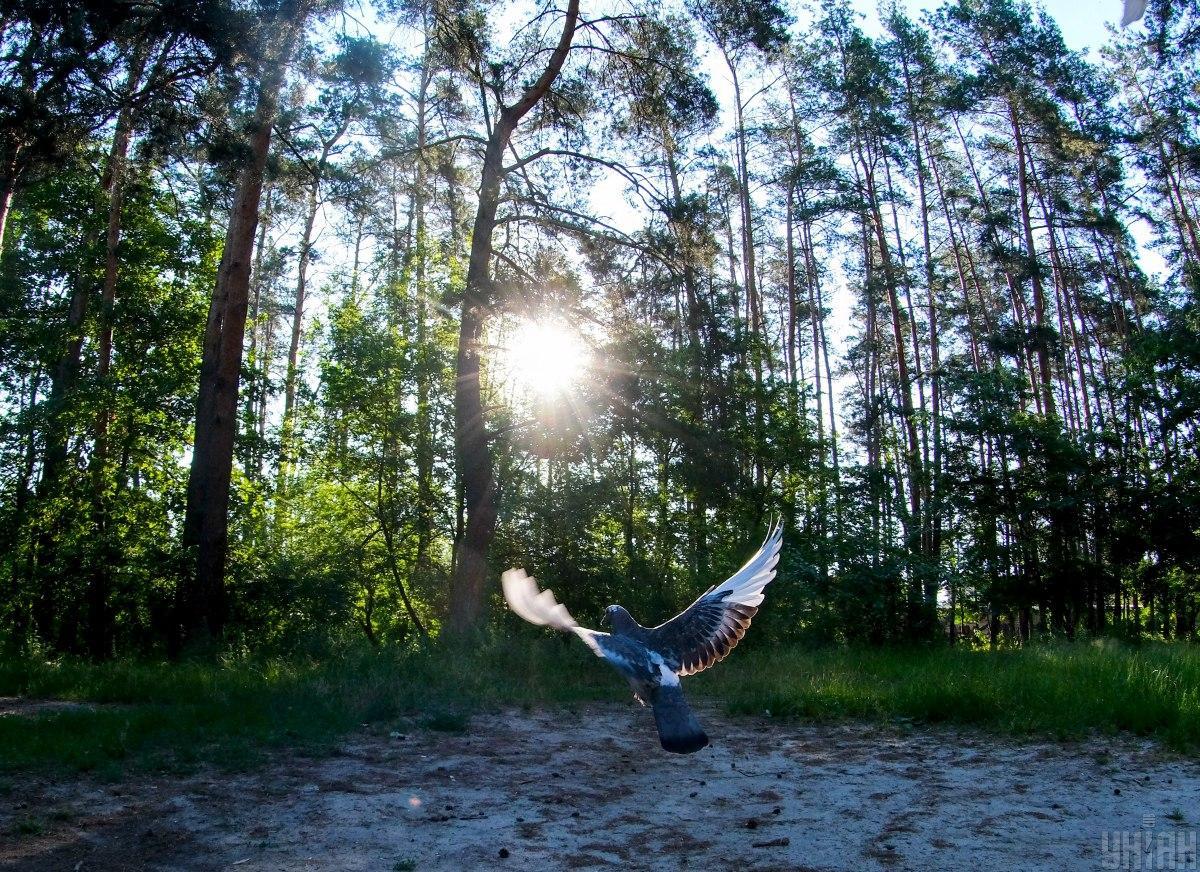 Возрождение лесов поможет человечеству в восстановлении после пандемии  ООН