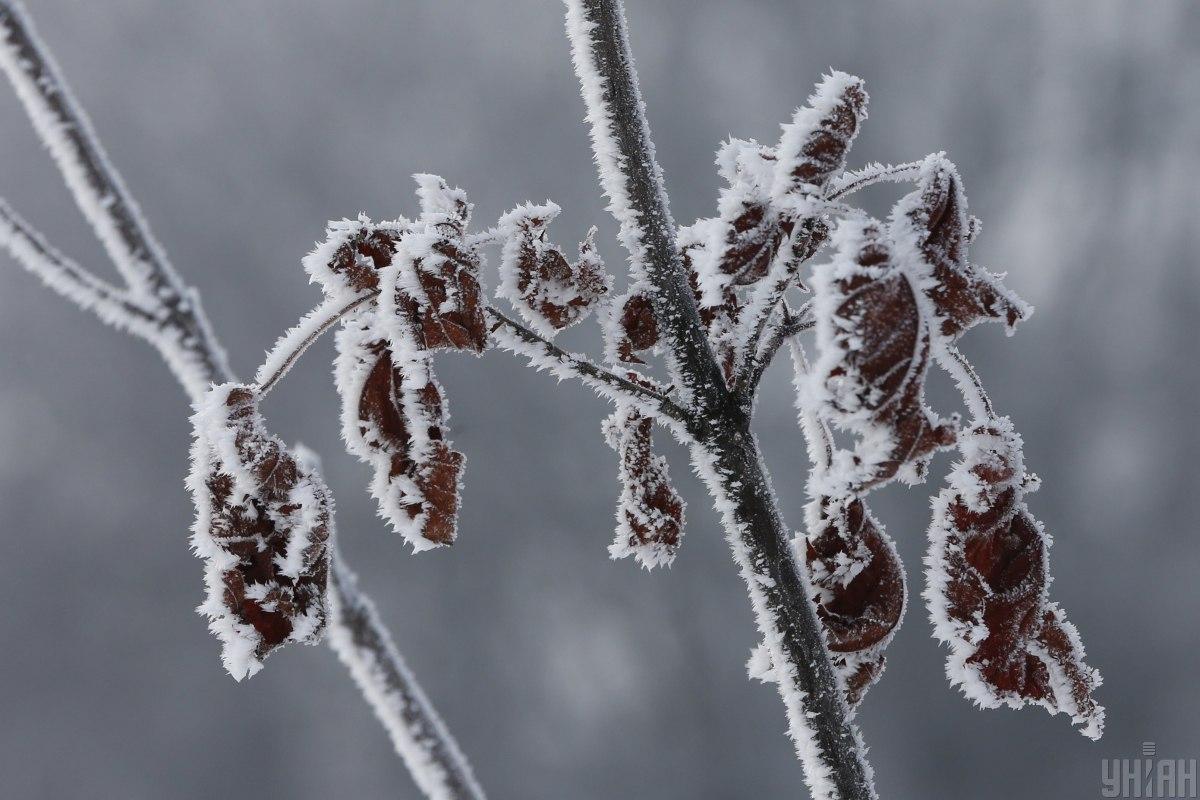1605089059 3723 - Синоптик Диденко рассказала, какой будет погода 7 декабря — Синоптик