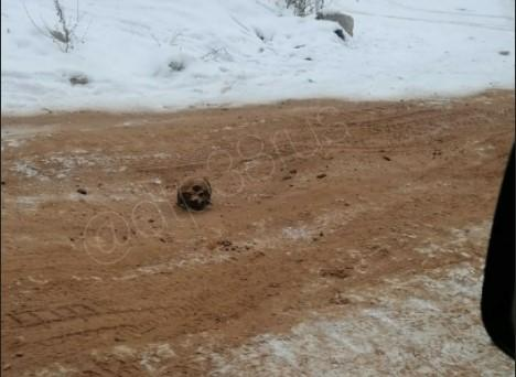 Новости России - В России дорогу засыпали песком с человеческими останками (фото) — Новости России —