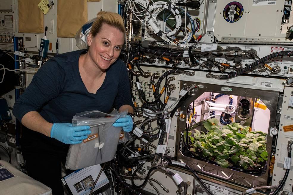1607381539 3027 - астронавты впервые собрали урожай редиски, выращенной в космосе — новости