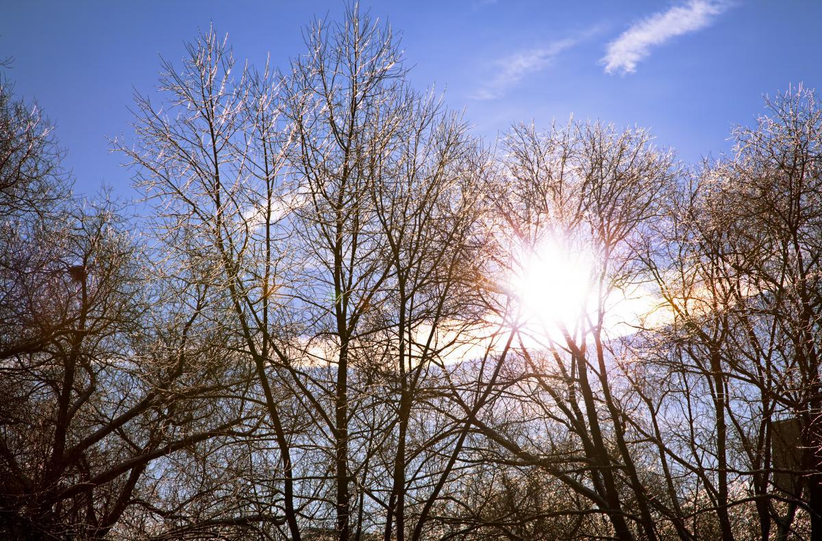 Перед Рождеством украинцев порадует солнце, в нескольких областях