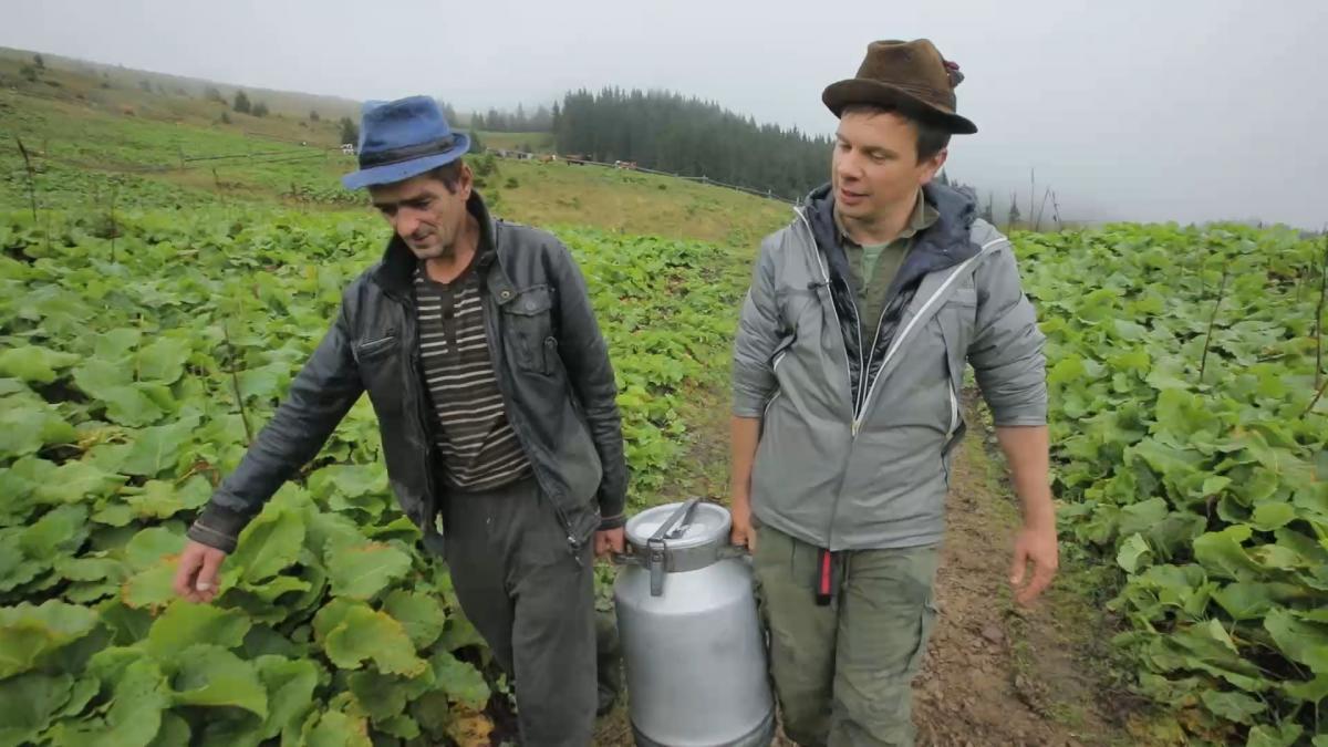 В новом выпуске Мандруй Україною з Дмитром Комаровим показали, как добывают белое золото Карпат