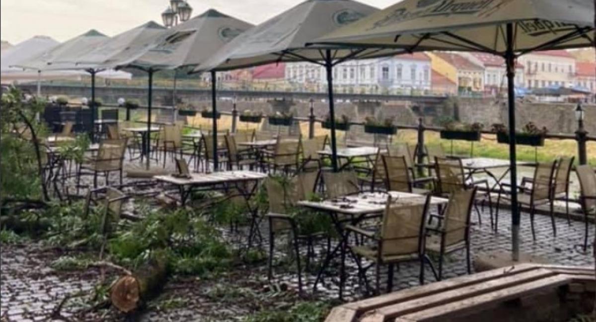 В Ужгороде огромная ветка упала на головы посетителей кафе - инцидент попал на видео