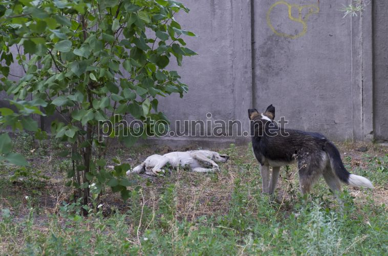 Photo The corpse of a wandering dog - UNIAN