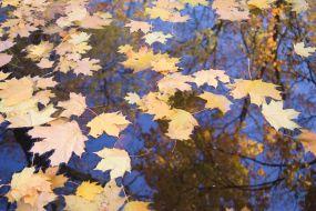 Жанр. Осень
