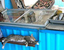 Кіт лежить на рибному базарі у Севастополі
