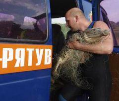 Водолаз заносить відловлену у ставку  крокодилицю в автомобіль оперативно-рятувальної служби. Одеса 25 червня