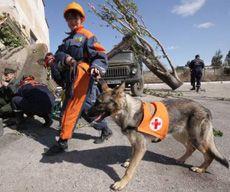 Сотрудница кинологической службы МЧС Украины с собакой во время учений в Симферополе. 21 сентября