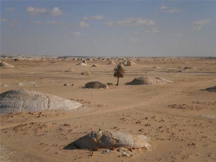 По дорозі між Каср-аль-Фарафра (в оазі Фарафра) та Бавіті (оаза Бахарійя) розташовані два унікальні місця: Біла та Чорна пустелі