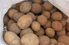 Украину неизбежно ждет дефицит картошки - эксперт Экономика СЕГОДНЯ.