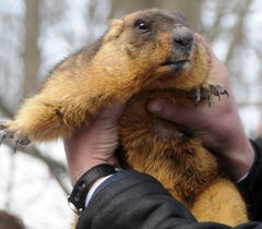 """Groundhog Timko II  """"promised"""" more 20 days of frost. Gaydary village of Zmievskyi District, the Kharkiv Oblast"""
