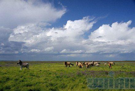 аскания-нова асканія-нова тварини степ животные заповедник заповідник зебра