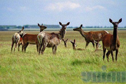 аскания-нова асканія-нова тварини степ животные заповедник заповідник