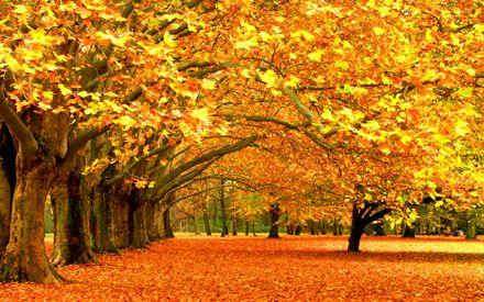 Синоптики говорят, что осень начинается 15 августа