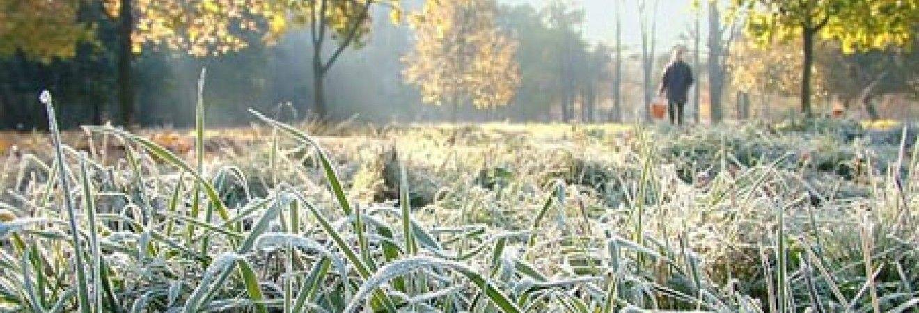 У Київській області 23-25 квітня очікуються заморозки