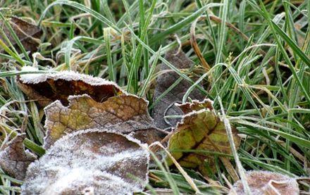 Заморозки начнутся уже завтра