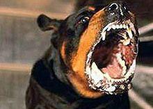 Строжевая собака догнала человека и загрызла