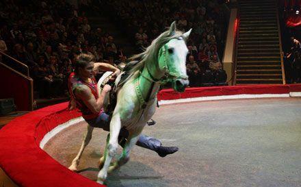 В Луганск Цирк им. Ю.Никулина едет с программой «Елка в цирке». Фото circusnikulin.ru