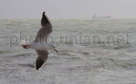 море, чайка