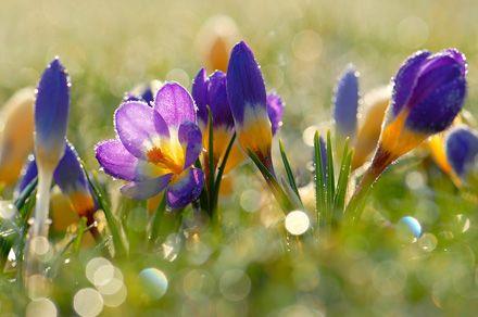 Квіти весни