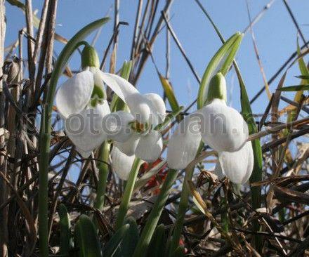 Погода, квіти навесні