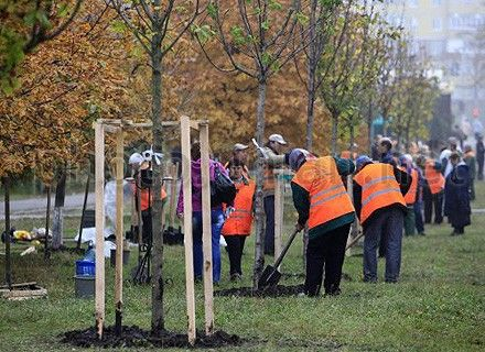 сажают деревья