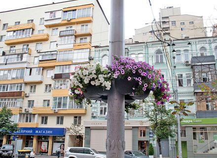 цветы / Фото: max-a-lebedev.livejournal.com