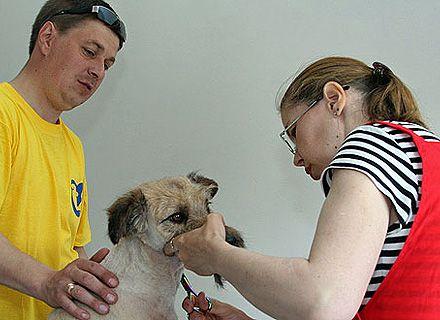 собака / Фото: пресс-служба КГГА