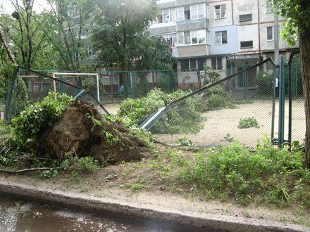 Ураган повалил около 300 деревьев в Сумах / Фото: racurs.ua