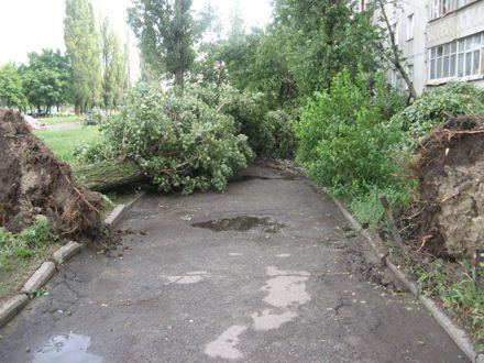 Деревья падали на школы и частные дома / Фото: racurs.уа