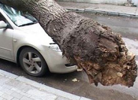 дерево упало на автомобиль / Фото: пресс-служба ГУ ДСНС Украины в Киеве