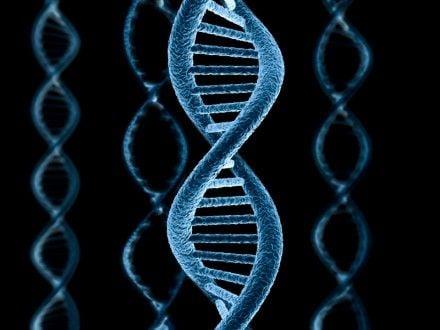 Сім із знайдених генів виявилися пов'язані з формуванням носа