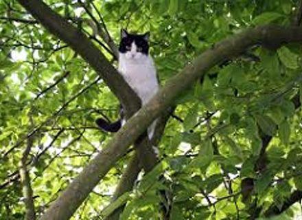 кот на дереве / Фото: kyiv.mns.gov.ua