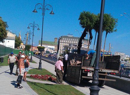 деревья / Фото: Facebook Славона Пономаря