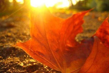 / Фото: kafanews.com