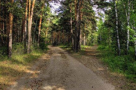 Беличанский лес обещают не вырубать