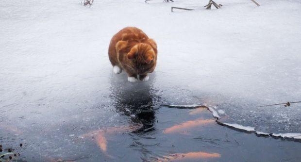 У Києві очікується +1+3 градуси / фото rewalls.com