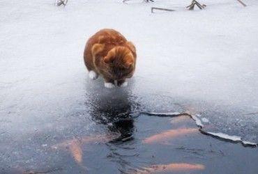 Радіти теплу будемо недовго: синоптик дала свіжий прогноз по Україні