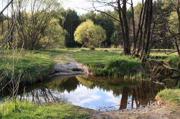 Весна, погода, лес / Wikimedia
